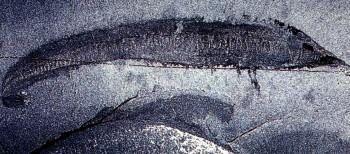 http://www.3planet.ru/history/imgsm/1280-2.jpg