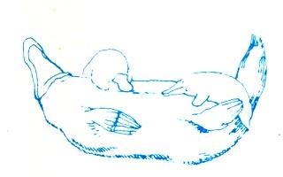 Мир животных. Отряды животных: Яйцекладущие звери, Звери сумчатые, Насекомоядные, Звери хищные, Непарнокопытные, Парнокопытные.