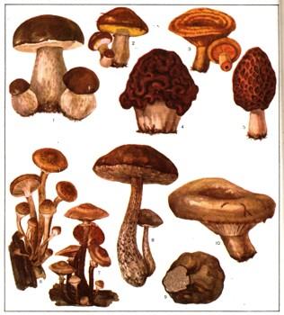 Клетки грибов в норме содержащие 2 не